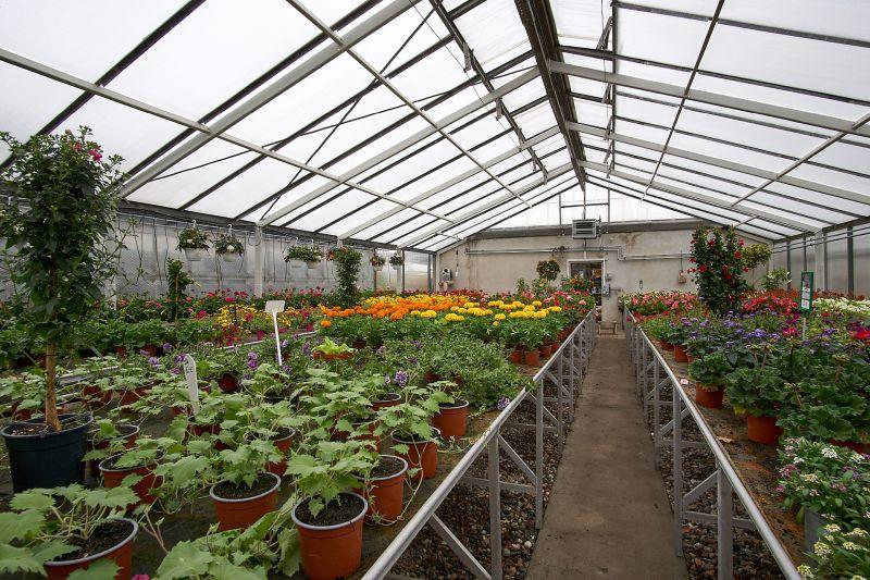 beet balkon pflanzen